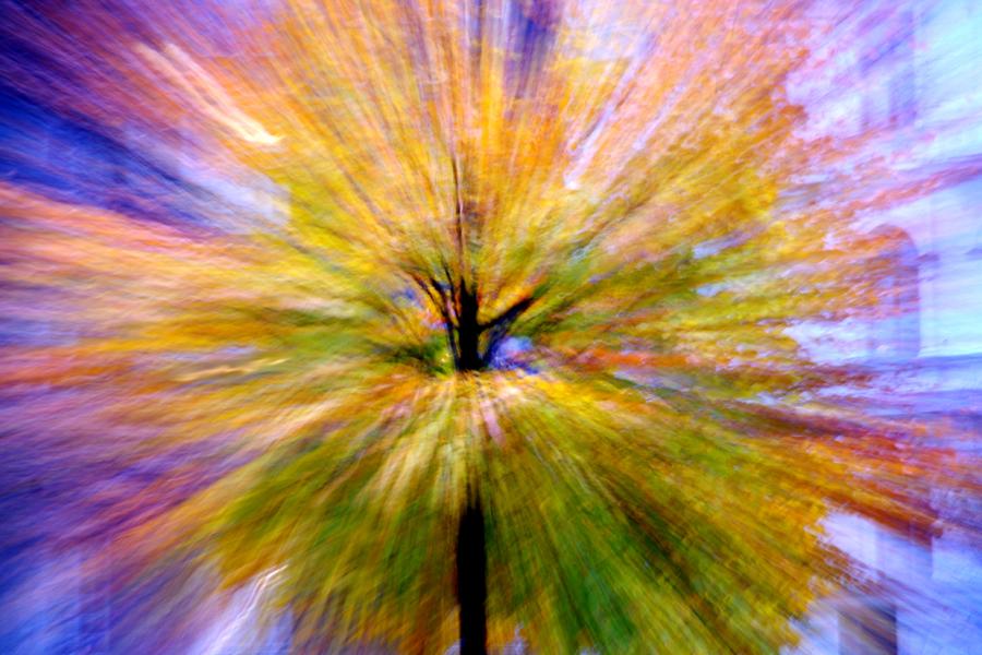 Tree-Colourful_Zsanett Waldau 11a